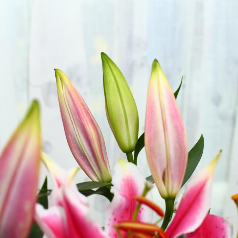 盆栽花苗带花苞室内客厅卧室优惠券